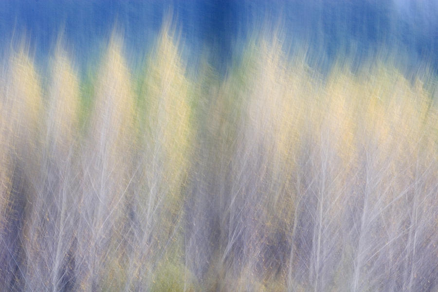 Trees Photograph - Glimpse Of Trees by Carol Leigh