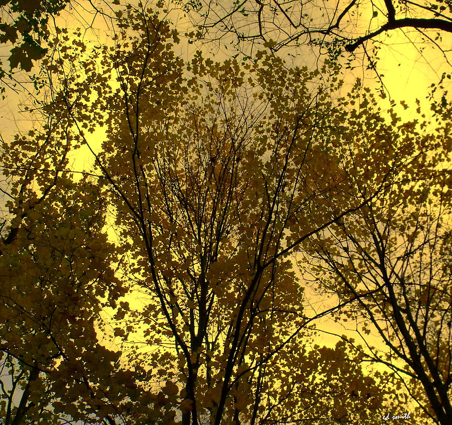 Trees Photograph - Glisten by Ed Smith