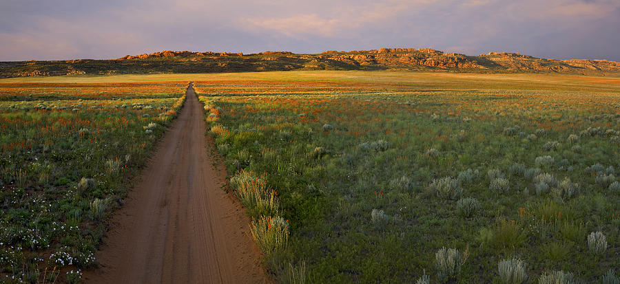 Globemallow Clusters And Dirt Road Salt Photograph by Tim Fitzharris