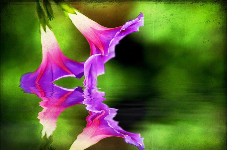 Bloom Photograph - Glory Reflection by Darren Fisher