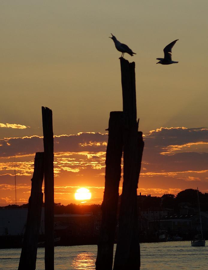 Gloucester Photograph - Gloucester Sunset by Matthew Green