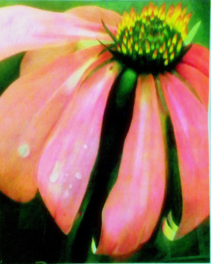 Pink Drawing - Glow by Amity Traylor