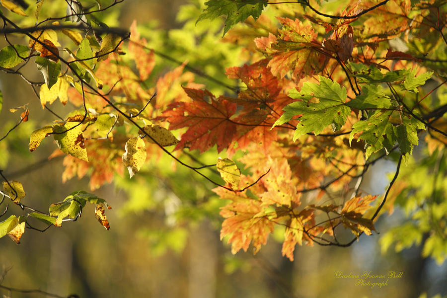 Autumn Leaves Photograph - Glowing Amber by Darlene Bell