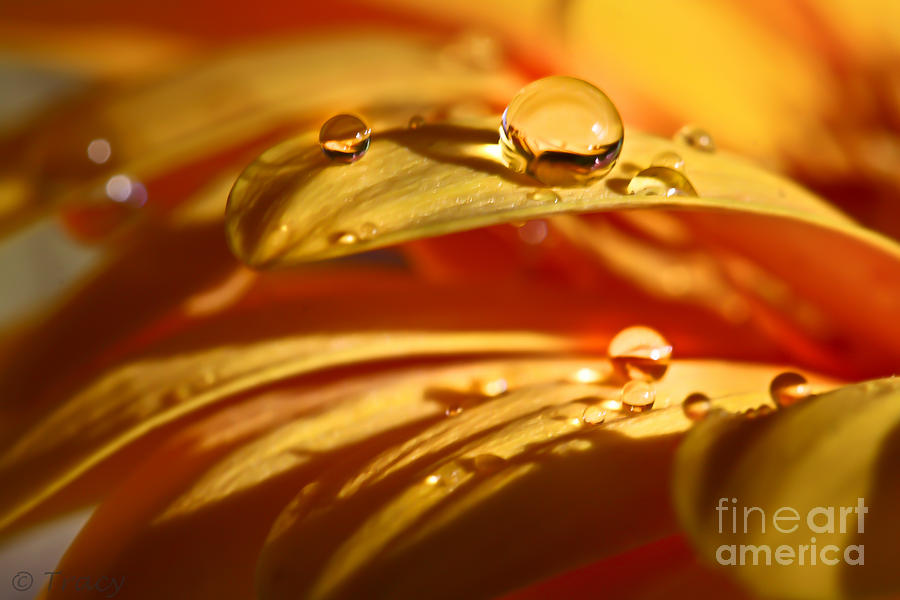 Waterdrops Photograph - Glowing Amber by Tracy  Hall