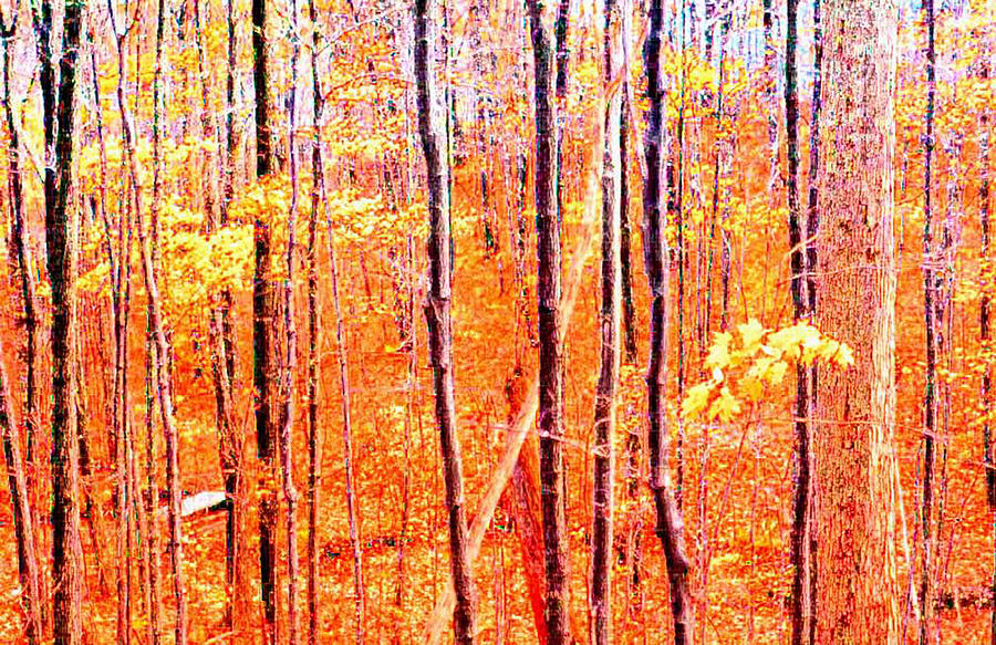 Autum Photograph - Glowing Forest  by Lyle Crump