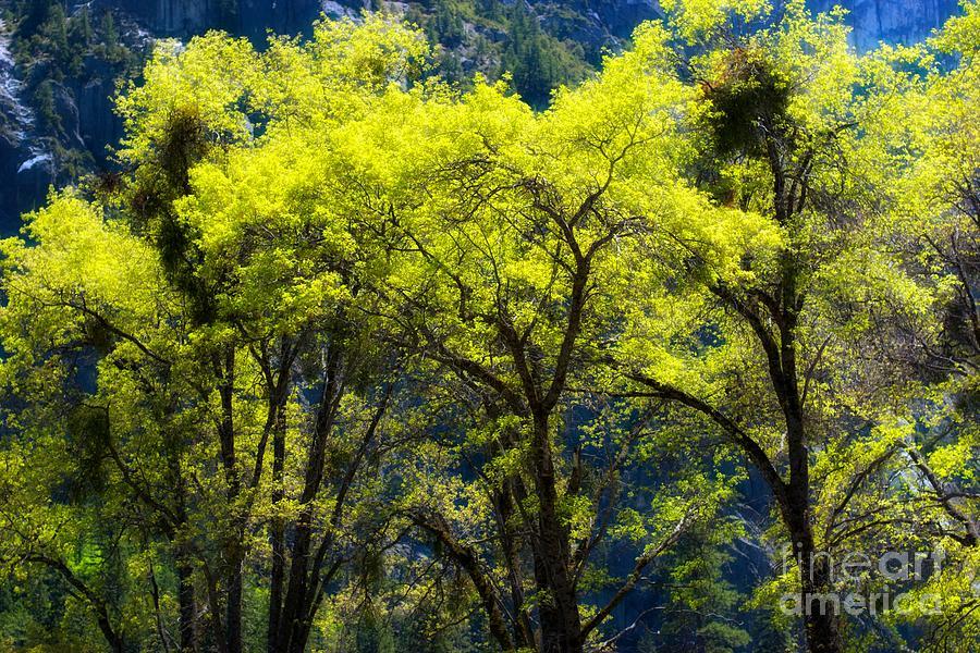 Nature Photograph - Glowing by Hideaki Sakurai