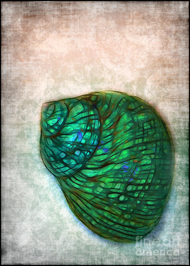 Glow Photograph - Glowing Seashell by Judi Bagwell