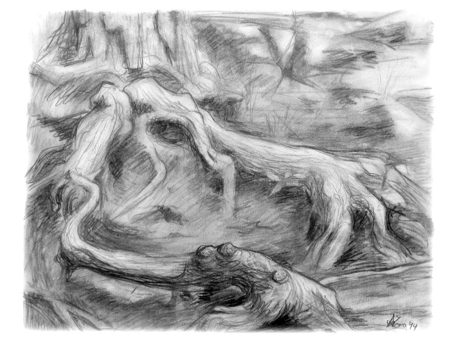 Charcoal Drawing - Gnarled by Adam Long