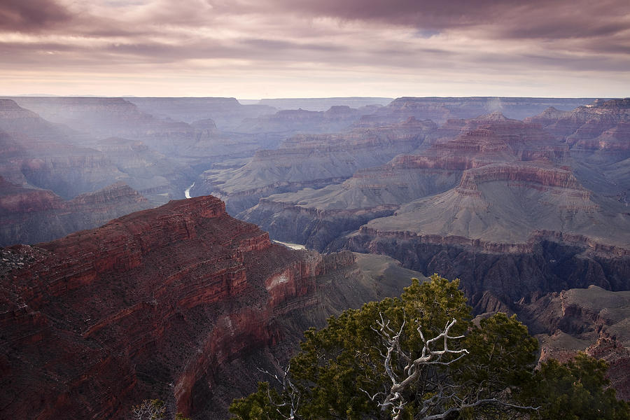 National Park Photograph - Gnarly Tree In The Canyon by Andrew Soundarajan