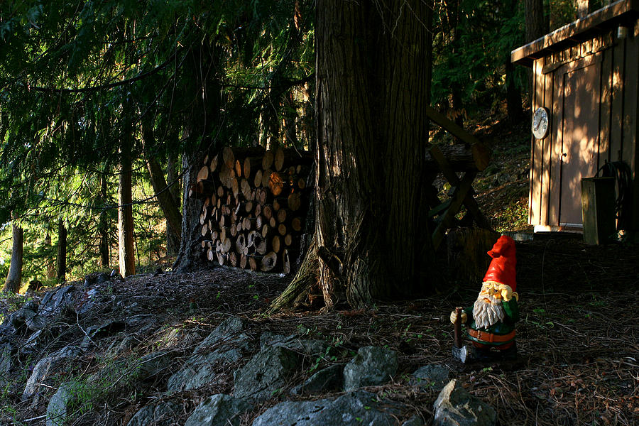 Gnome Photograph - Gnome And The Woodpile by Lorraine Devon Wilke