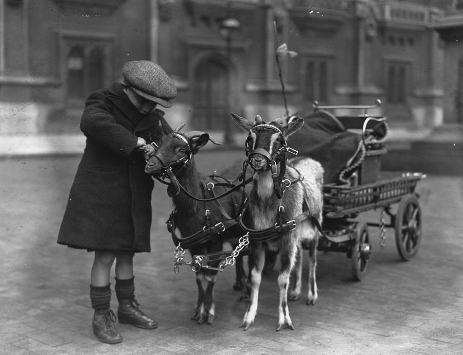 Child Photograph - Goat Cart by Fox Photos