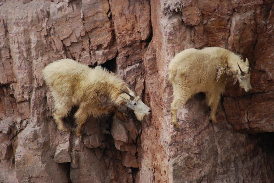 Kid Goat Rock Climbing