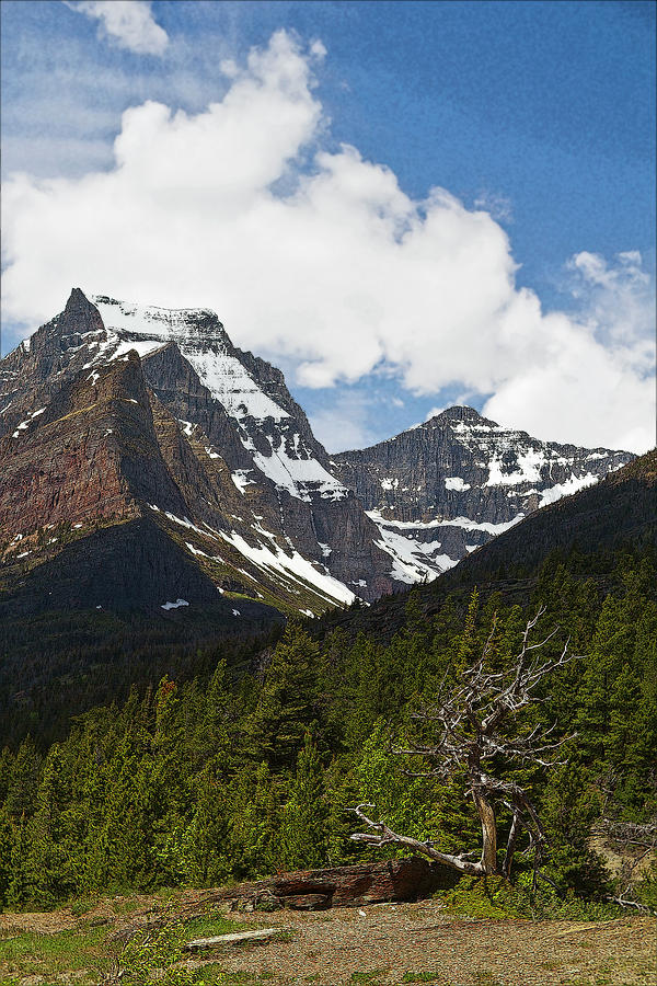 Going To The Sun Mountain Glacier National Park Spring Tree Larry Darnell Photograph by Larry Darnell