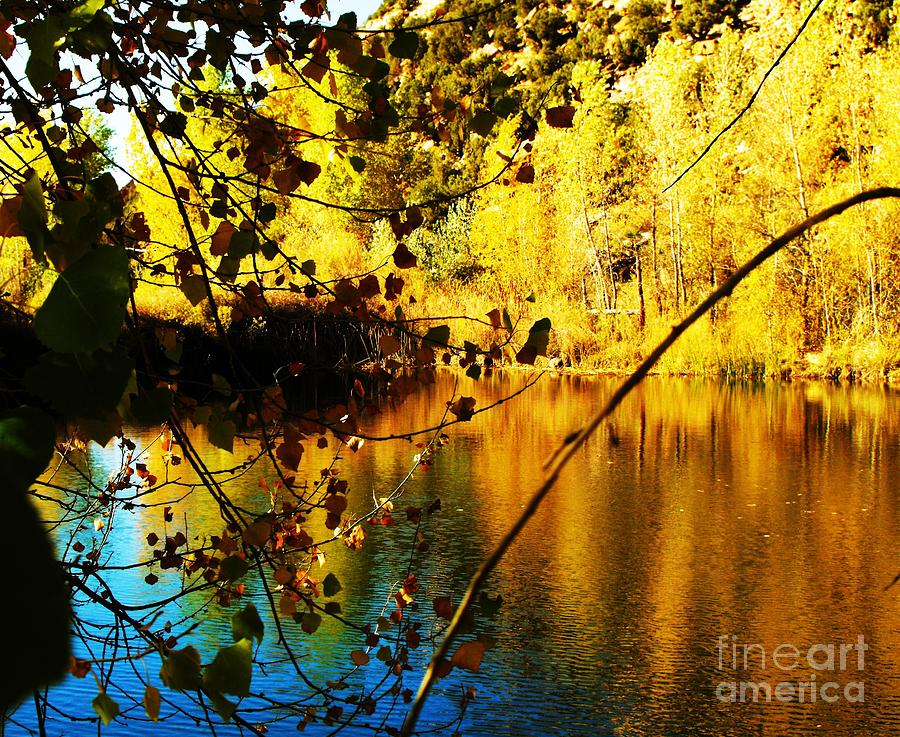 Gold And Blue Pond Digital Art by Annie Gibbons