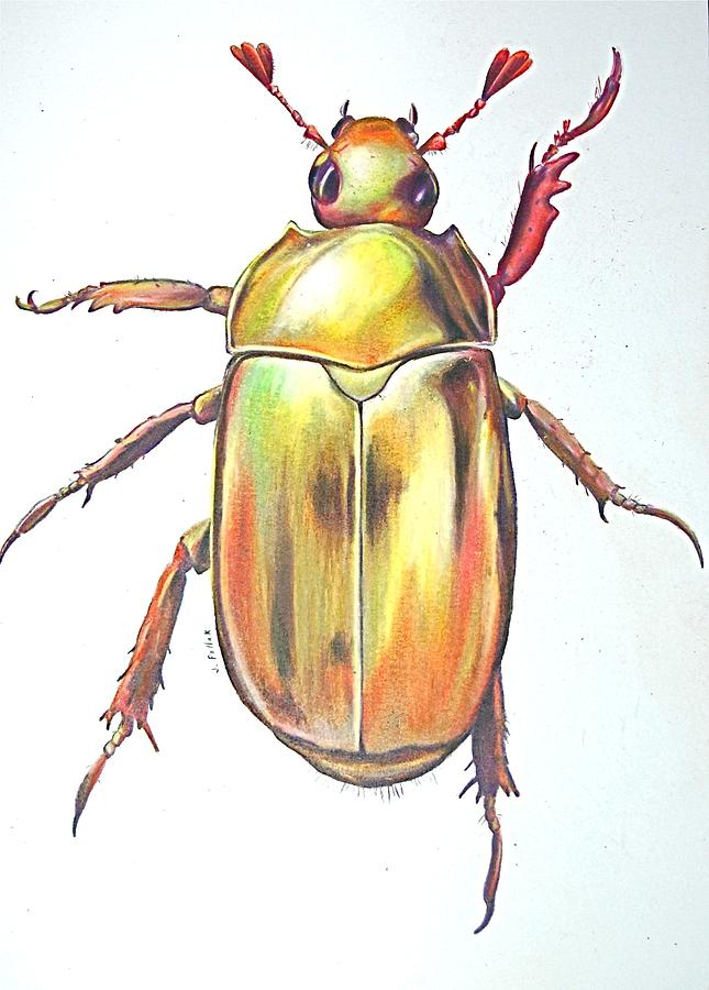 Beetle For Sale >> Gold Bug Drawing by Joan Pollak