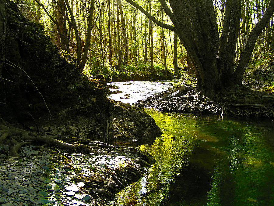 Tree Photograph - Gold River by Guadalupe Nicole Barrionuevo
