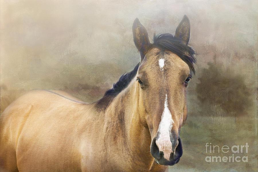 Horse Photograph - Golden by Betty LaRue