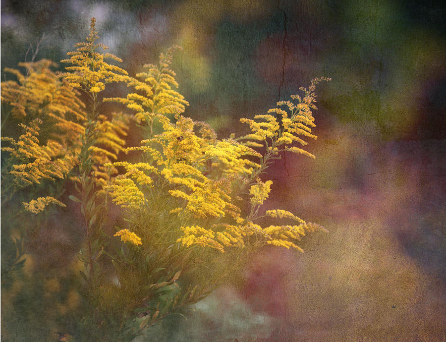 Floral Photograph - Golden by Brenda Bryant