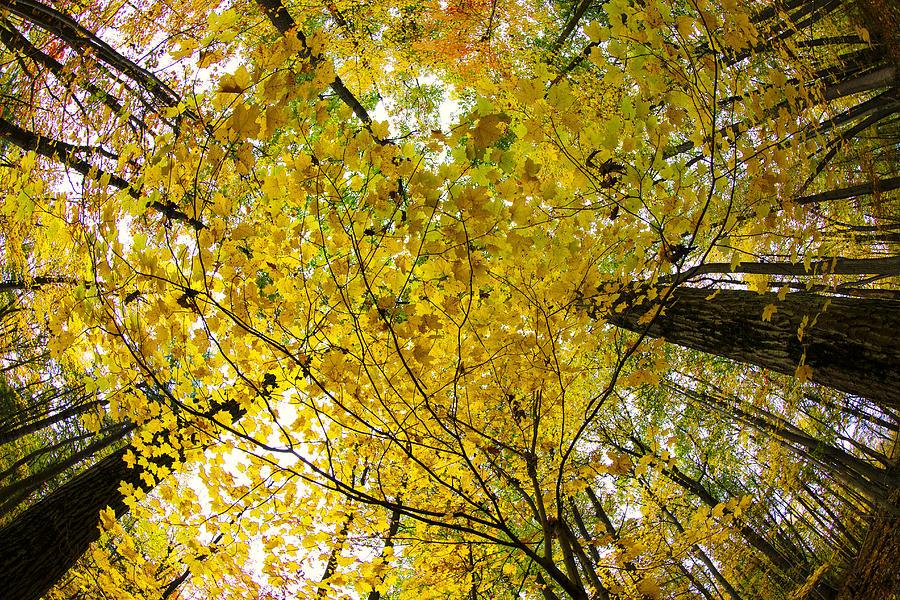 Letchworth Photographs Photograph - Golden Canopy by Rick Berk