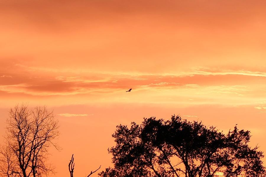 Gold Photograph - Golden Evening by Lorri Crossno