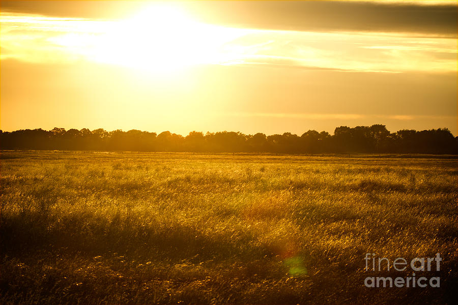 Piano Photograph - Golden Field by James Serikov