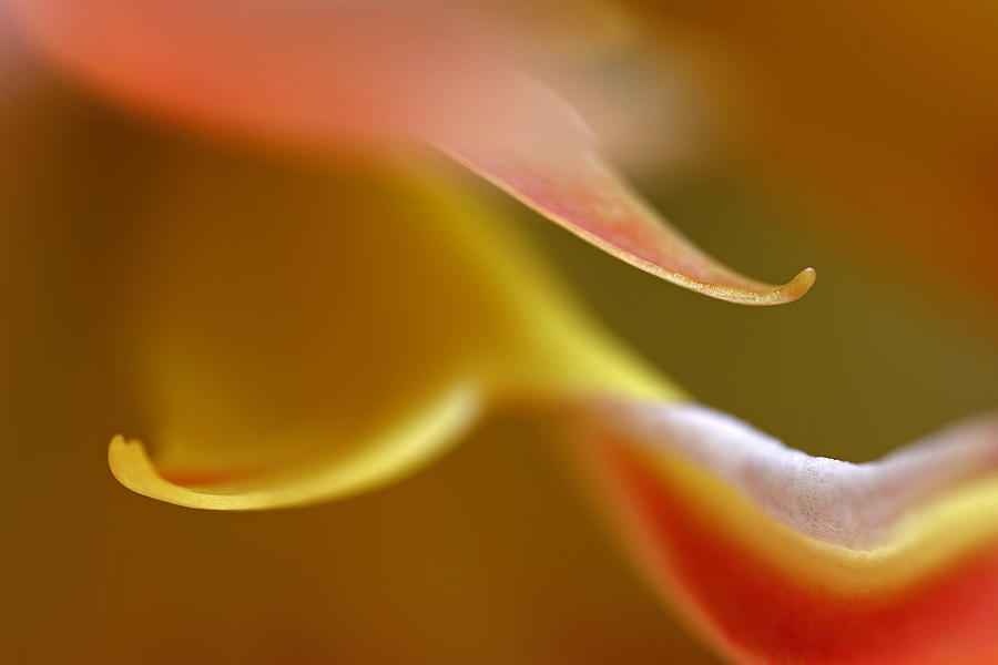 Abstract Photograph - Golden Glow by Juergen Roth