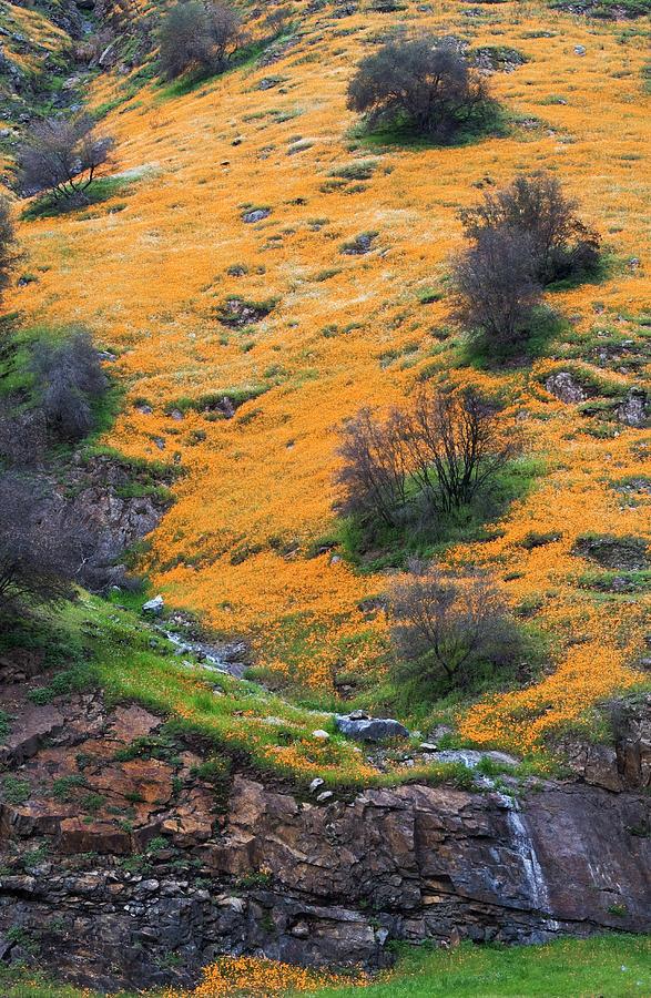 Poppies Photograph - Golden Hills by Floyd Hopper