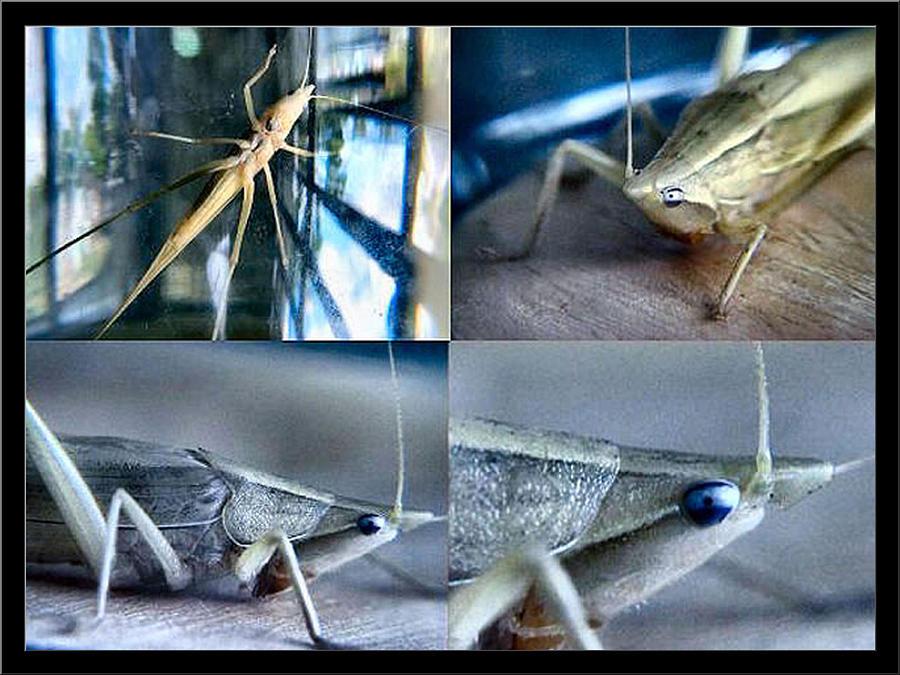Grasshopper Photograph - Golden Hopper 2002 by Glenn Bautista