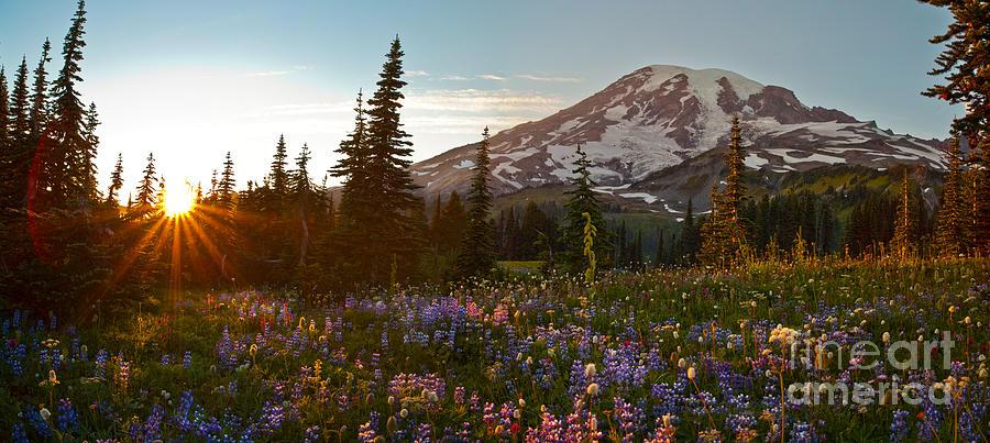 Rainier Photograph - Golden Meadows Of Wildflowers by Mike Reid