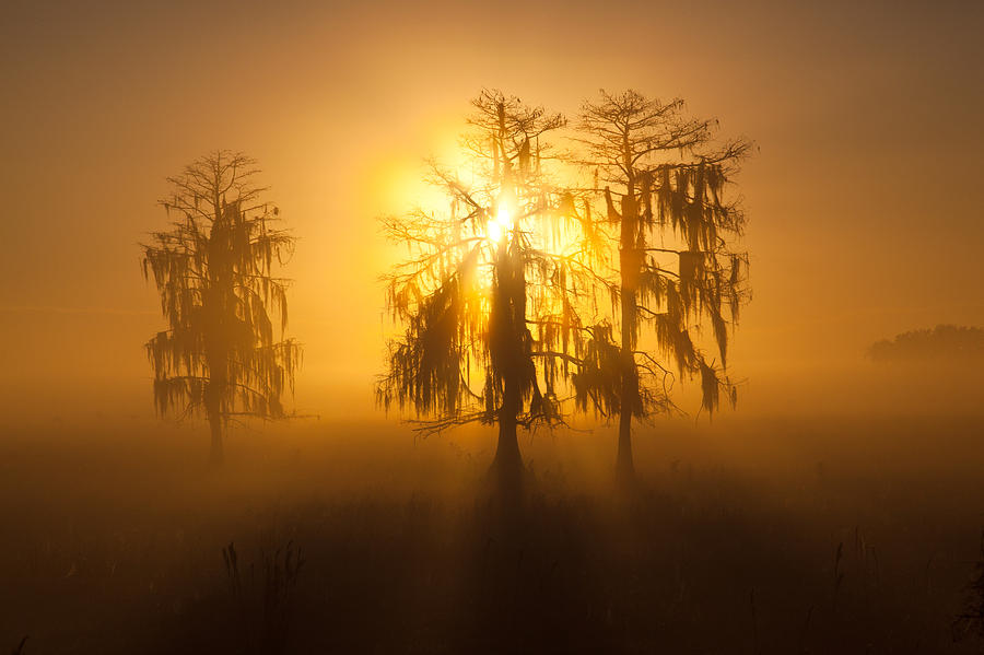 Usa Photograph - Golden Morning by Claudia Domenig