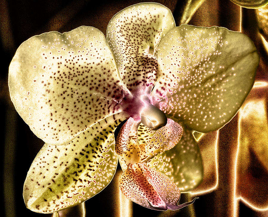 Orchid Photograph - Golden Orchid by Barbara Middleton