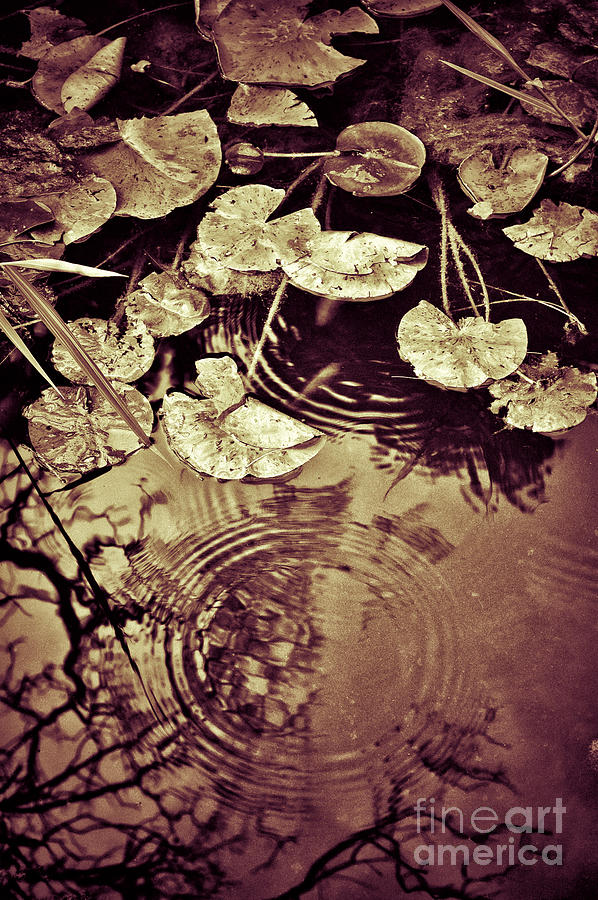 Lily Pads Photograph - Golden Pond by Silvia Ganora