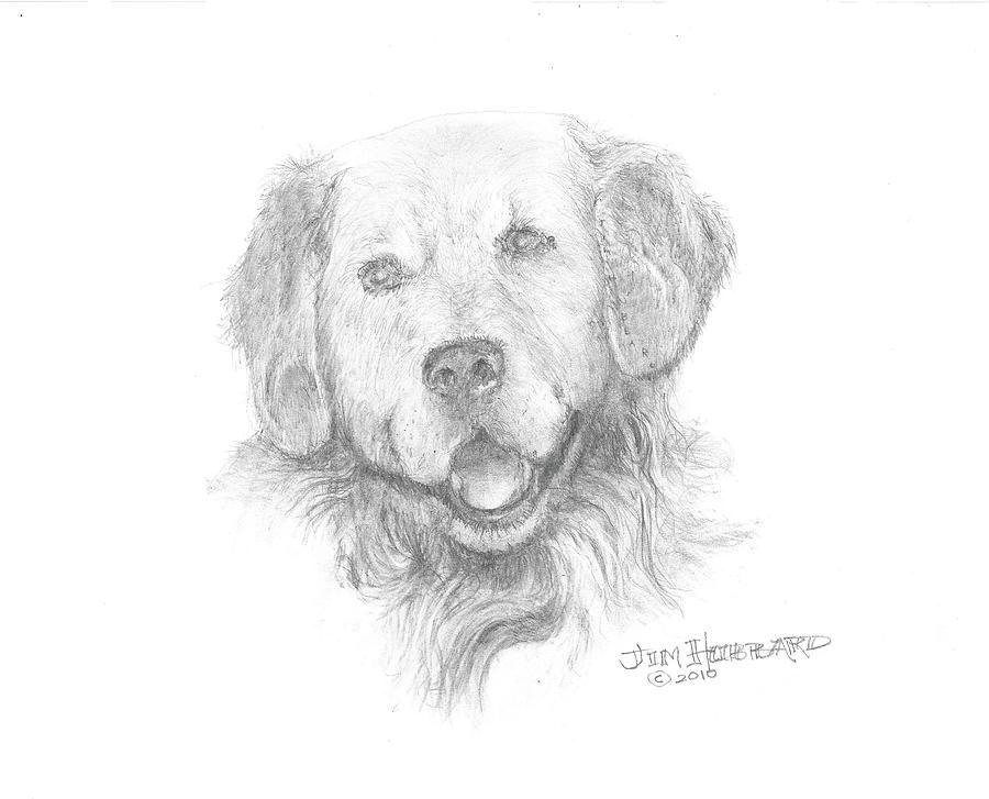 Golden Retriever Drawing - Golden Retriever by Jim Hubbard