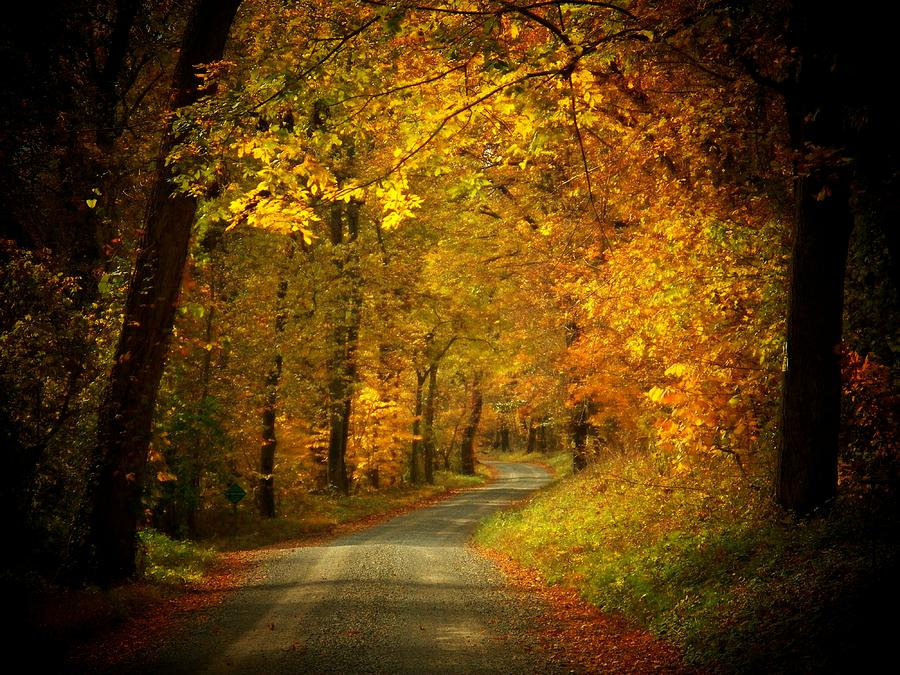 Autumn Photograph - Golden Road by Joyce Kimble Smith