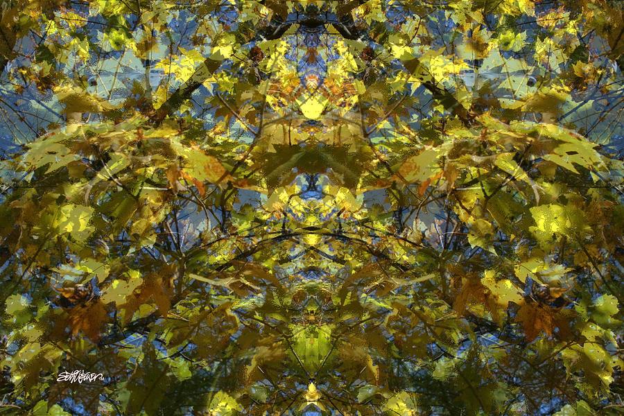 Fall Colors Photograph - Golden Rorschach by Seth Weaver
