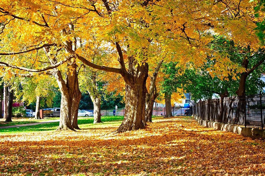 Autumn Photograph - Golden Slumber by David Forester