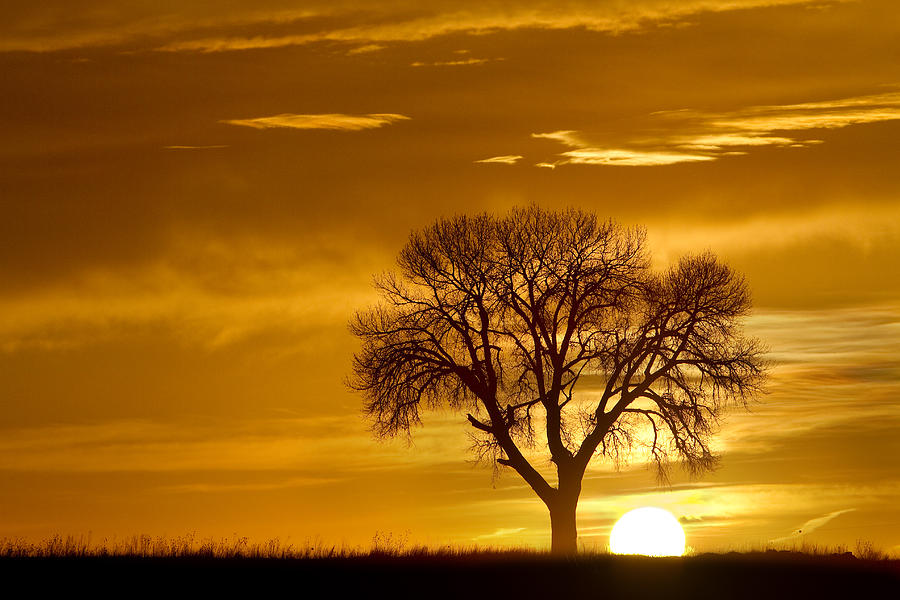 Tree Photograph - Golden Sunrise Silhouette by James BO  Insogna