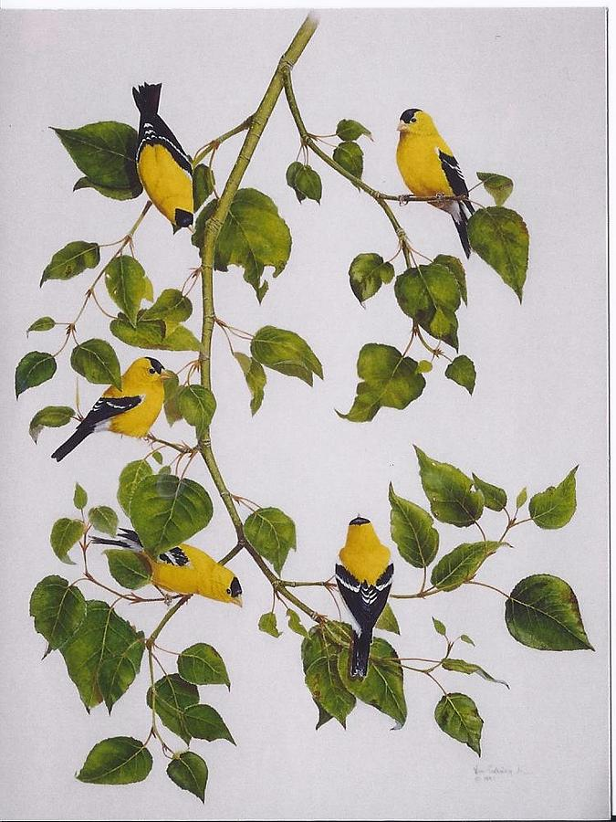 Goldfinches Painting - Goldfinches by Bill Gehring