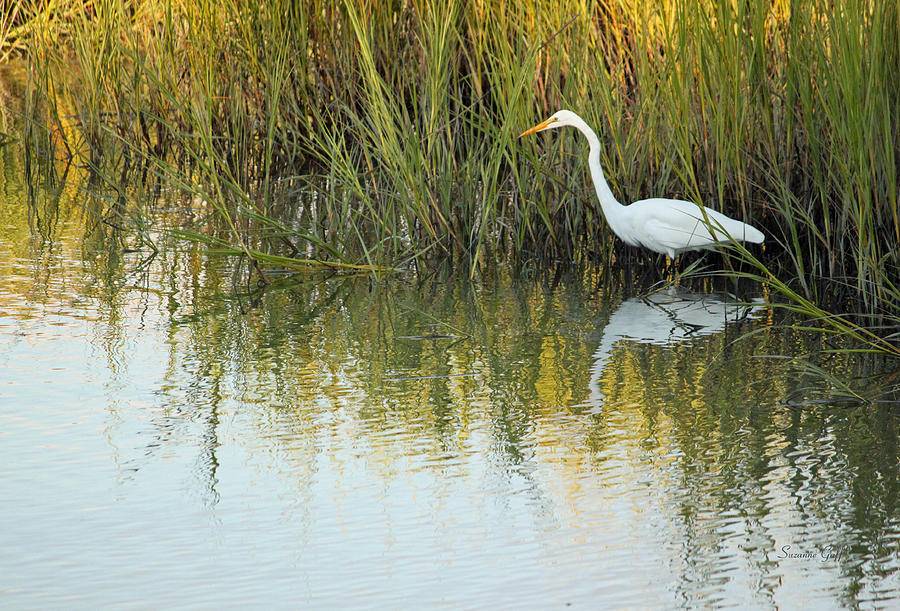 Egret Photograph - Gone Fishing II by Suzanne Gaff