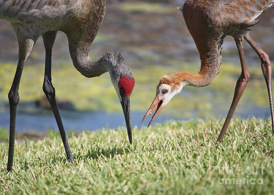 Feeding Birds Photograph - Good Catch by Carol Groenen
