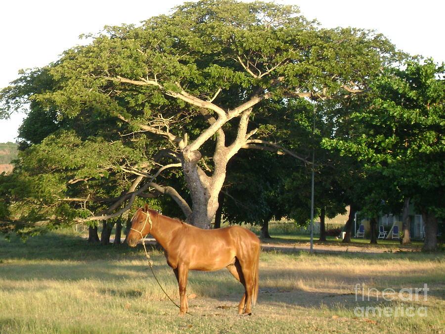 Horse Photograph - Good Horse At Dawn  by Laurel Fredericks