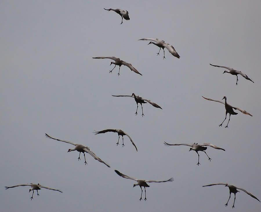 Cranes Photograph - Good Luck Finding A Parking Spot by Don Schwartz