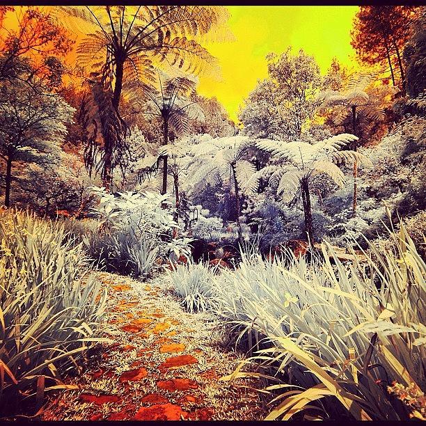 Ig Photograph - Good Morning #sunrise #garden by Tommy Tjahjono