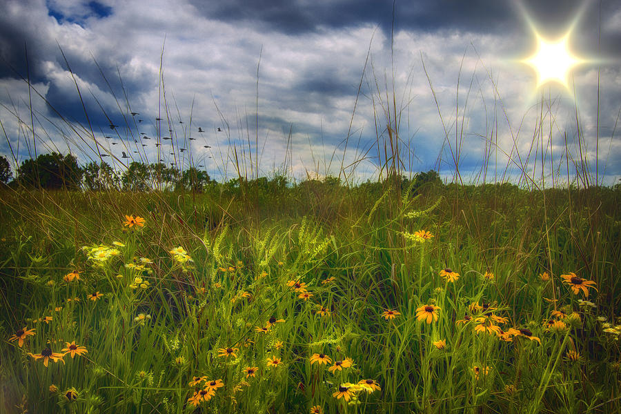 Field Photograph - Good Morning Sunshine by Bill Tiepelman