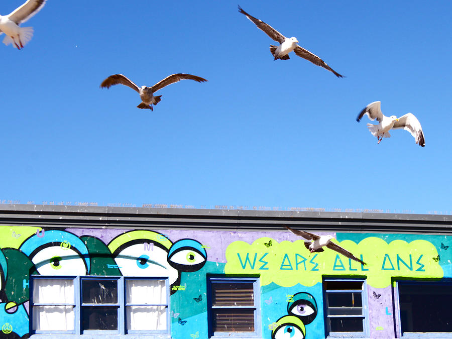 Seagulls Photograph - Good Vibes At Venice Beach by Casey Berger