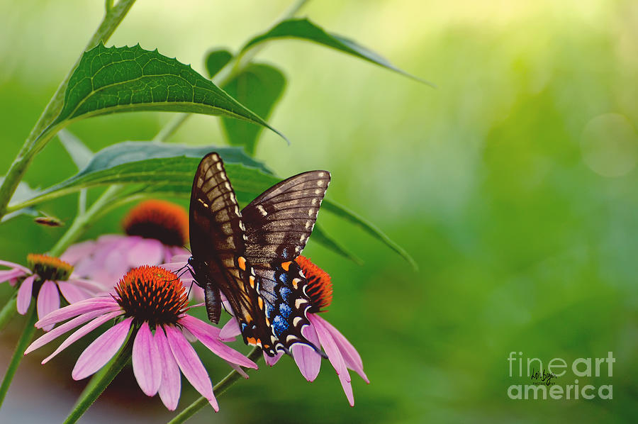 Butterfly Photograph - Goodbye Again by Lois Bryan