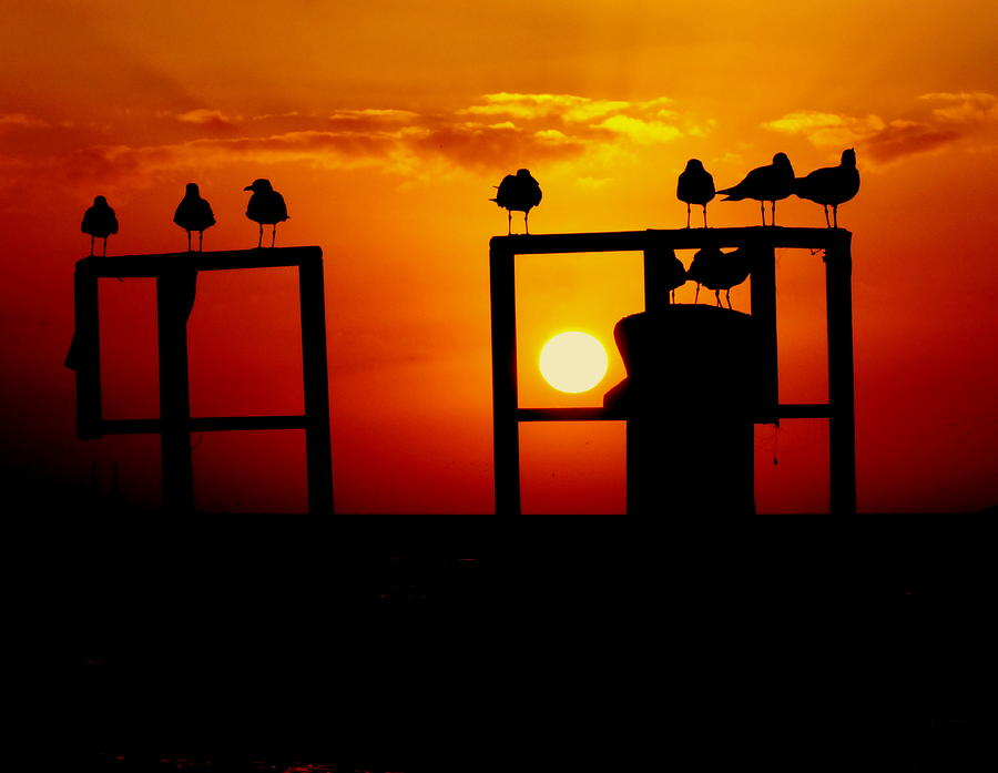 Key West Sunsets Photograph - Goodnight Gulls by Karen Wiles