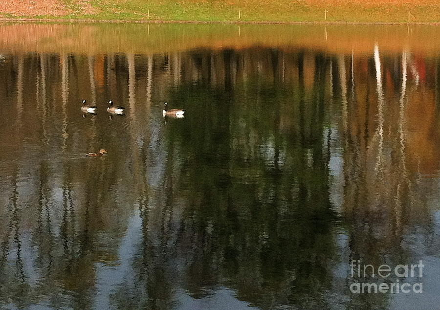 Geese Photograph - Goose Goose Duck Goose by Trish Hale