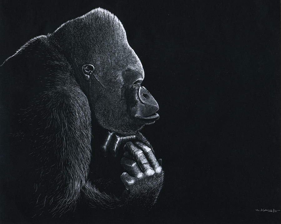 Gorilla Drawing - Gorilla My Dreams by Bill Gehring