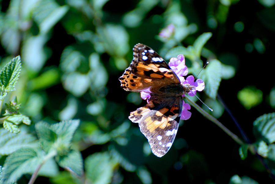 Butterfly Photograph - Got It Covered by Eric Tressler